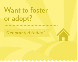 Get started in your journey to foster or adopt by using our step-by-step information.